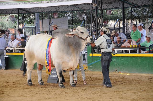 Livestock fair in Colombia