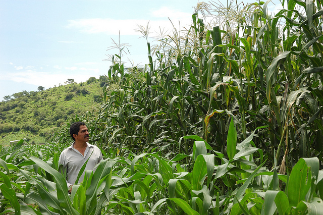 Farmer in Mexico