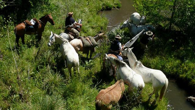 Horses in La Redota, Paysandú