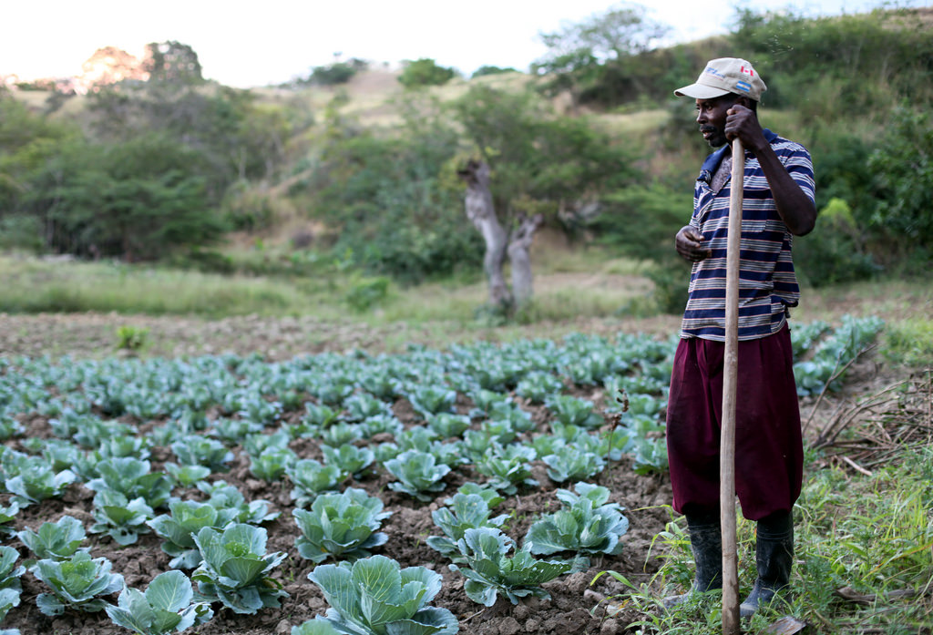 Farmer in Haiti