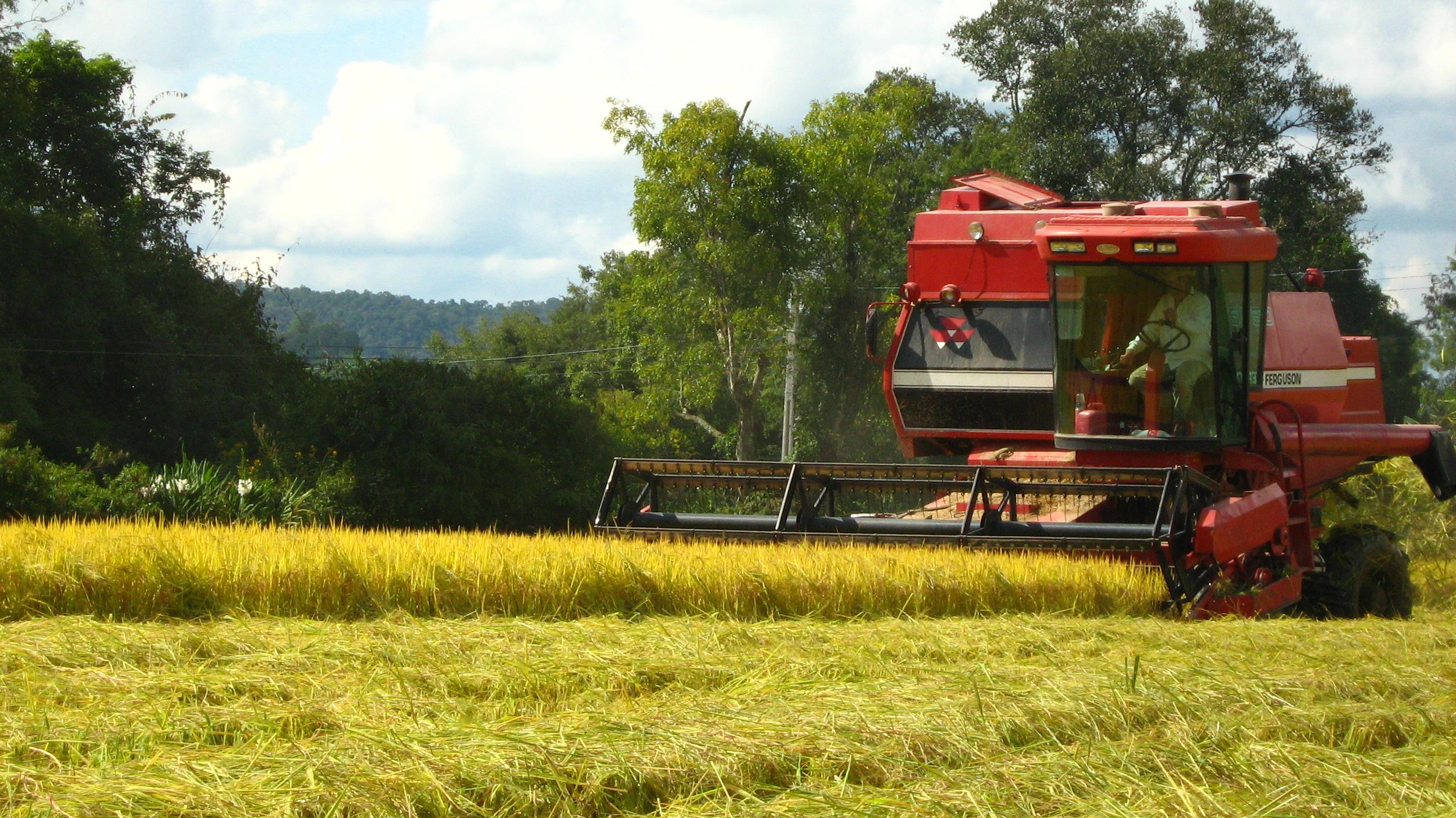 Plantación de arroz en Rio do Sul, Brasil