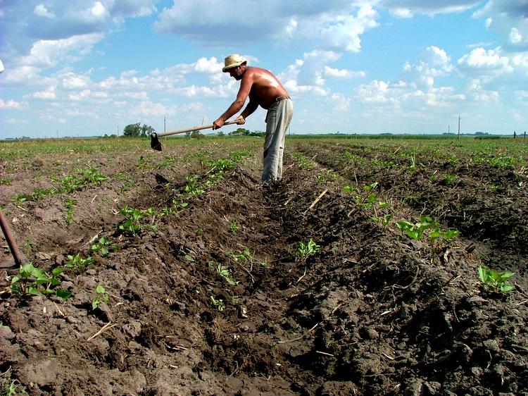 Farmer in Uruguay