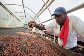 Pepitas de Cacao en Colombia