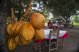 Fresh coconuts in Cienfuegos, Cuba