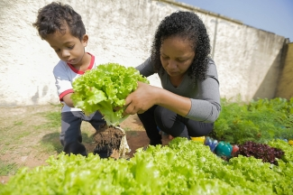 Mother and son harvest lettuces in Brazil