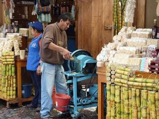 Crushing sugar cane in Baños, Ecuador