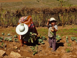 Family farmers working in the fields of the municipality of Alalay, Cochabamba (Bolivia)