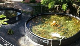 Aquaculture fish farm