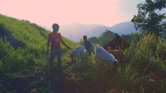 children in a green field in Jamaica