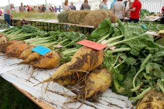 Fodder Beet at a fair