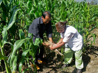 Mexican farmers Porfirio and Josefina show the plant matter that covers the soil beneath their crop.