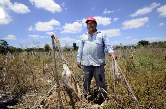 A farmer in a field of last season's maize remains during the dry season, in Jamastran, Honduras.