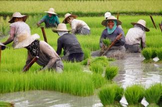 Terrazas de arroz en China