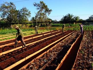 Plant nursery in Cuba