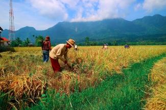 Cultivos en Cuba