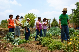 Vegetable crops in Jalisco