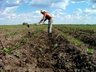 Agricultor en Uruguay