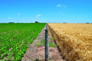 Campos de trigo y soja