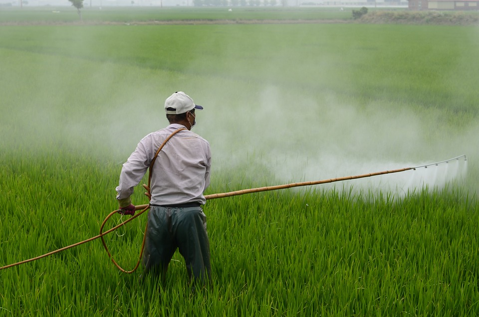 Hombre fumigando los cultivos