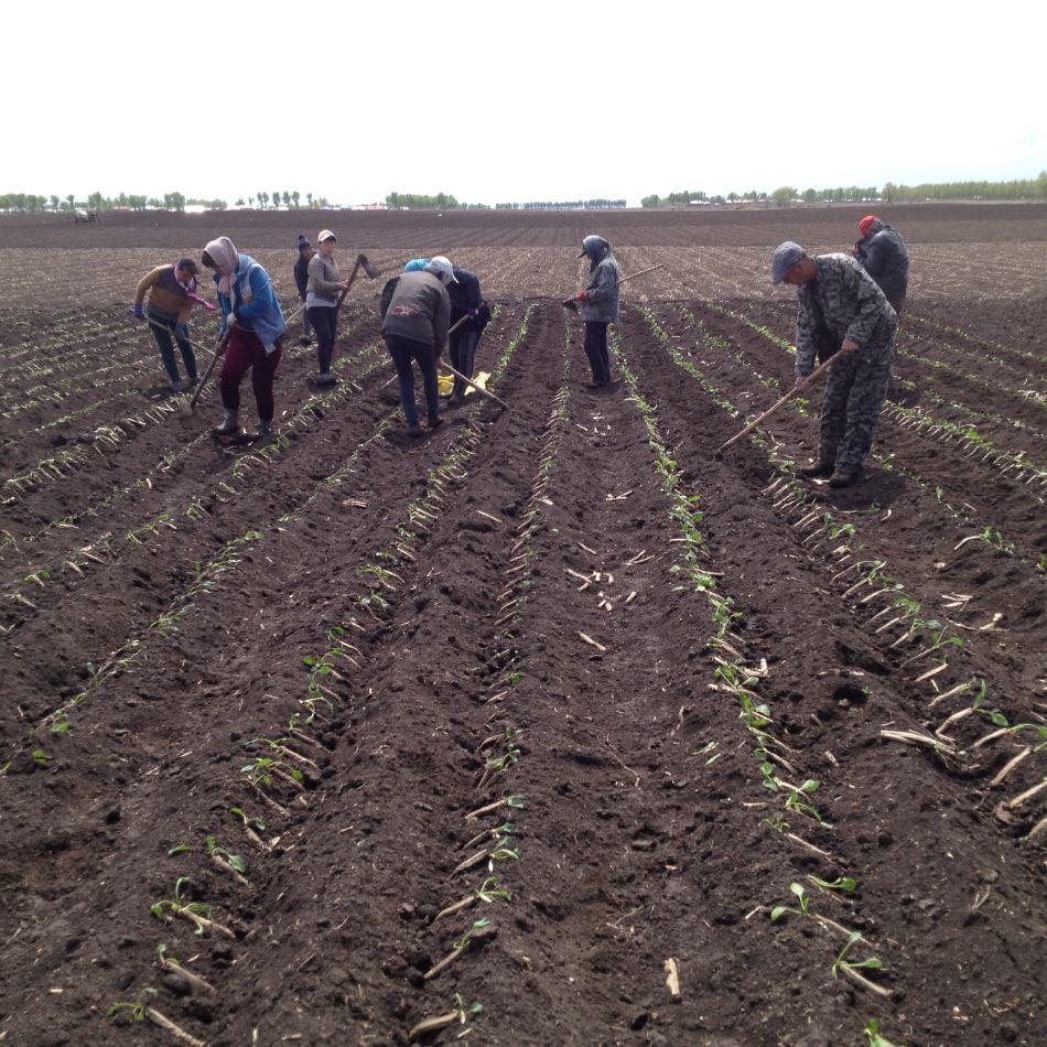 black soil Ukraine is encompassed by a belt of black soil preparing for pesticide  application ukraine has vast tracts of fertile black soil along the black sea and  has long.