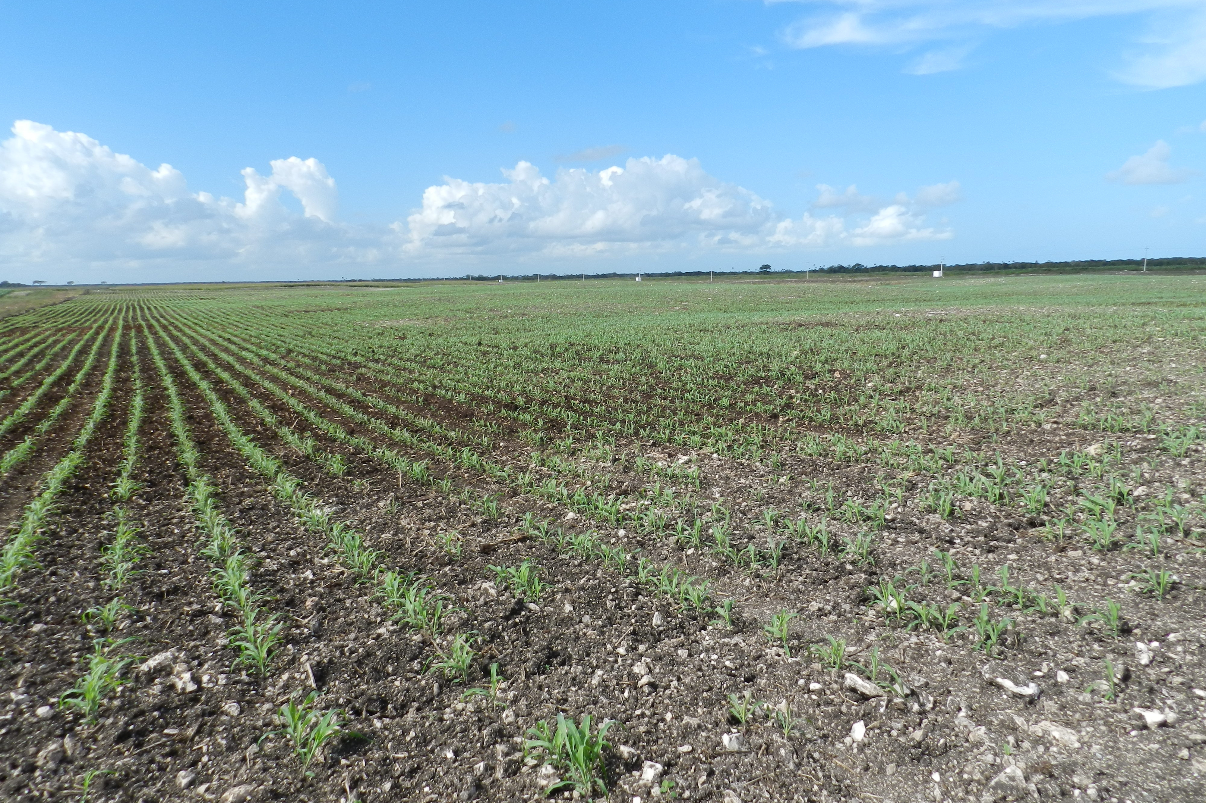 Join the online consultation for developing the voluntary for Soil management
