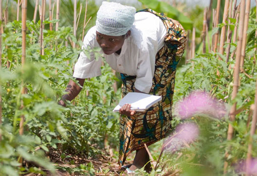 Agroecology Knowledge Hub