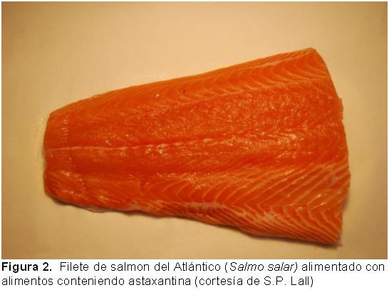 FAO: Salmón del Atlántico - Página principal