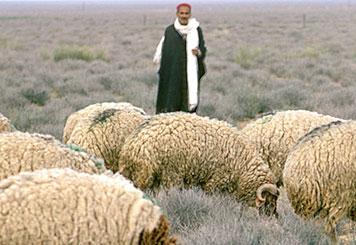 Centro de conocimiento pastoril