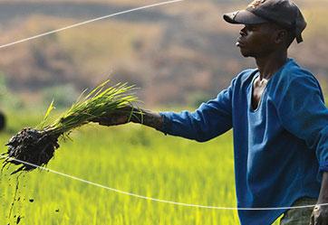 الأغذية والزراعة المستدامتين