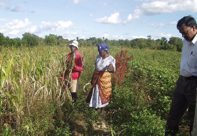 تكثيف إنتاج المحاصيل المستدامة