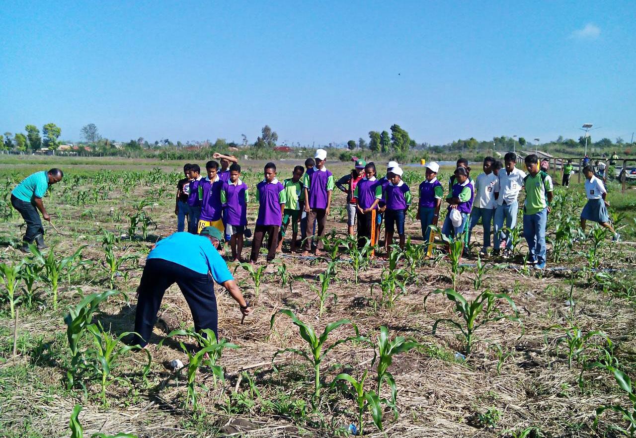 保护性农业