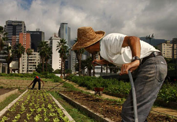 Городское сельское хозяйство