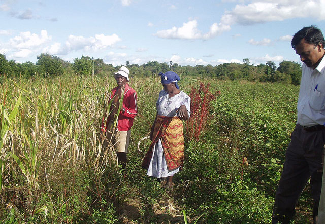 Sustainable crop production intensification