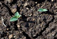 土壤主题门户网站