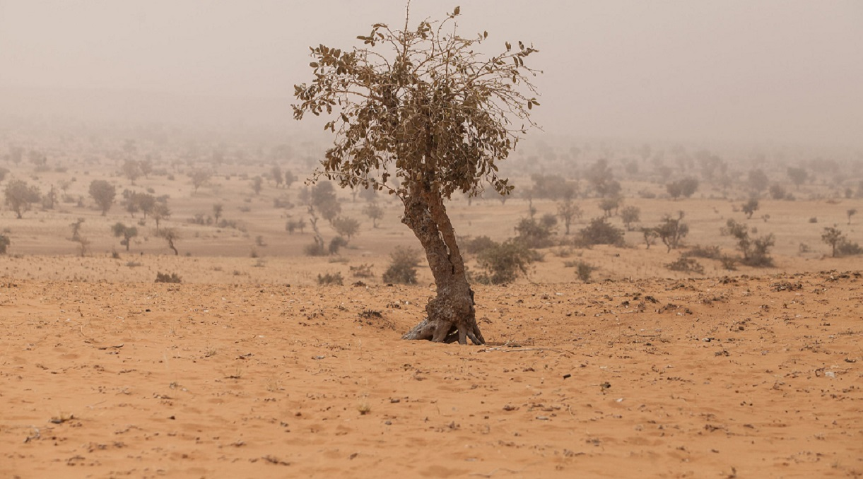 Time to scale up and support Africa's Great Green Wall'