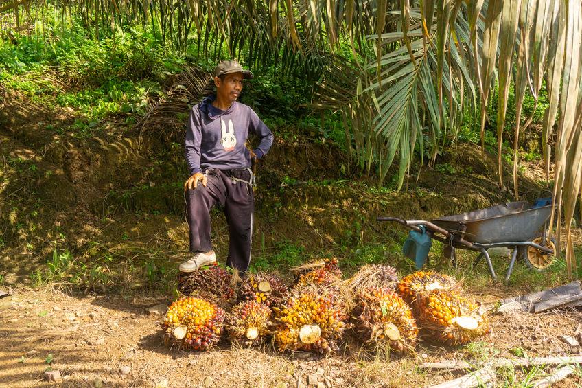 Palm oil in Malaysia