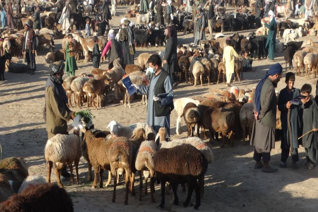 Afghanistan | protecting livestock herders and markets in times of COVID-19
