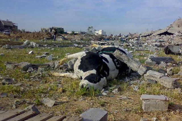 Agriculture in Gaza severely damaged