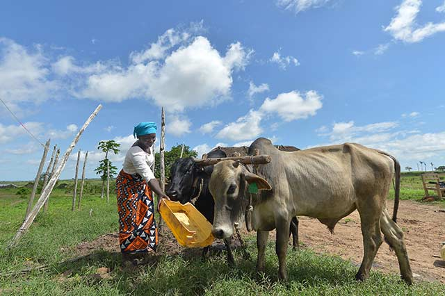 Easing the impact of drought in Kenya – Mlongo's story