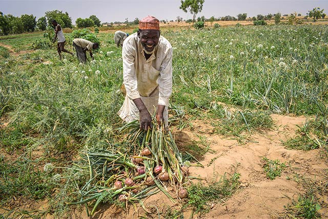 FAO's dry season programme is building household resilience in northeastern Nigeria