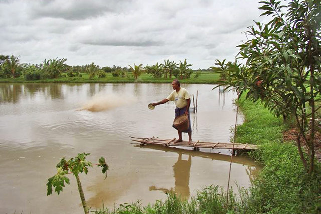 Restoration of production capacity and food security for farmers and fishers in Myanmar