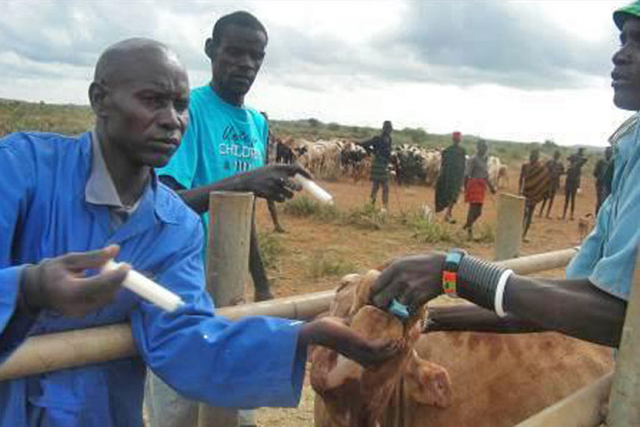 Support to the control of contagious bovine pleuropneumonia (CBPP) in Uganda