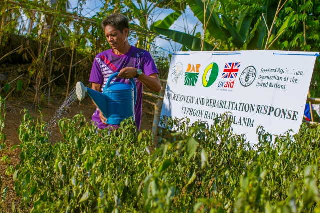 Building more resilient farming communities after Typhoon Haiyan