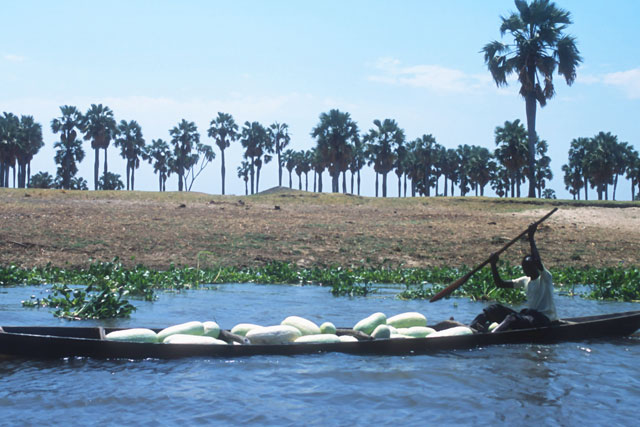 South Sudan naturally endowed for sustainable growth through agriculture