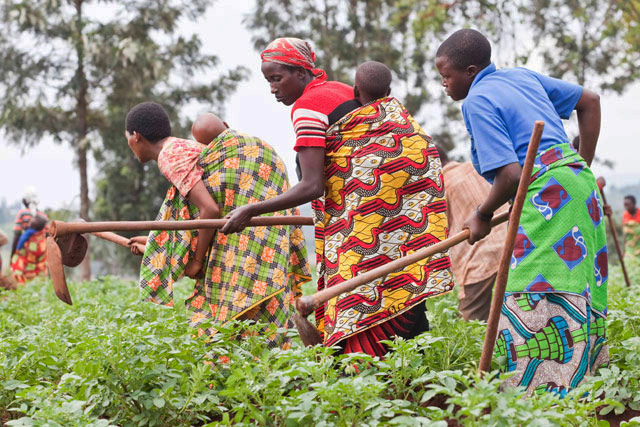 Closing the gender gap in agriculture