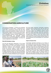 Zimbabwe: Conservation Agriculture