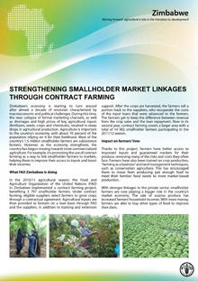 Zimbabwe: Strengthening Smallholder Market Linkages Through Contract Farming
