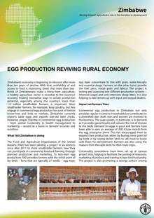 Zimbabwe: Egg Production Reviving Rural Economy