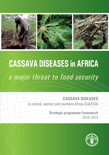 Cassava diseases in Africa: a major threat to food security