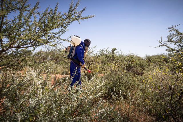 Additional support from the Netherlands for desert locust ravaged communities